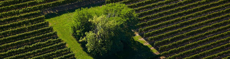 Friuli Latisana